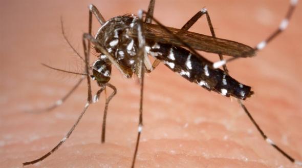 Κέρκυρα: Κρούσμα του ιού του Δυτικού Νείλου!
