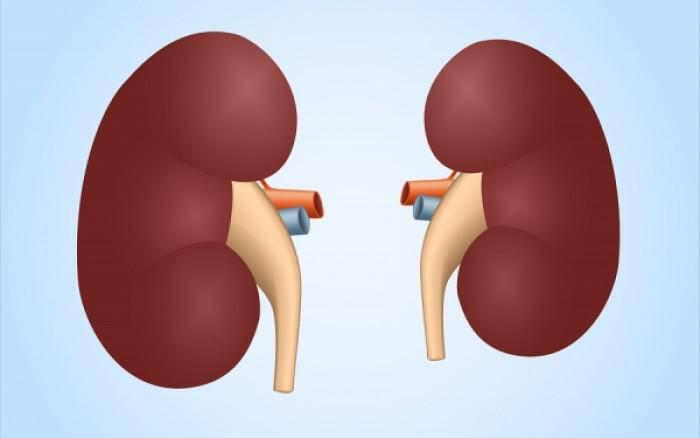 Γιατί η καλή λειτουργία των νεφρών είναι θέμα ζωής ή θανάτου (βίντεο)