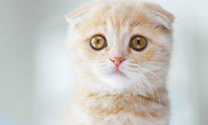 bigstock-pets-animals-and-cats-concept-137798981
