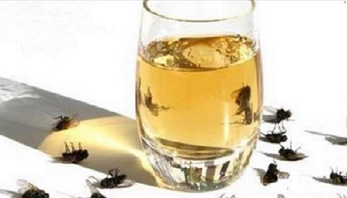 5c617710c475 Κάνει Θαύματα  Εξαφανίστε Τις Μύγες Από Το Σπίτι Σας